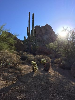 Arizona Pinnacle