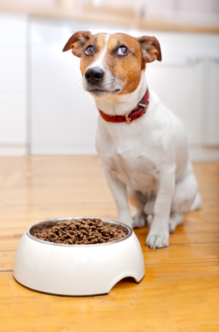Puppy_food bowl_funny
